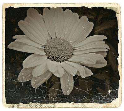 Aster Mixed Media - Sepia Vintage Daisy 1 by Chalet Roome-Rigdon