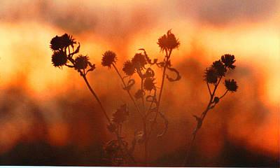 Photograph - September Sonlight by R Thomas Brass
