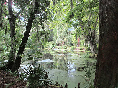 Photograph - Serene Swamp by Silvie Kendall