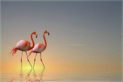Flamingoes Photograph - Serenity II by Anna Cseresnjes