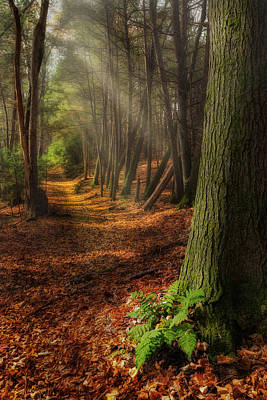 Serenity Of The Forest Print by Bill Wakeley