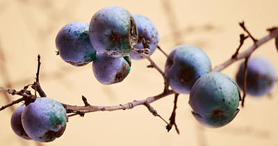 Fruit Tree Art Photograph - Serpents Seeds by Jerry Cordeiro