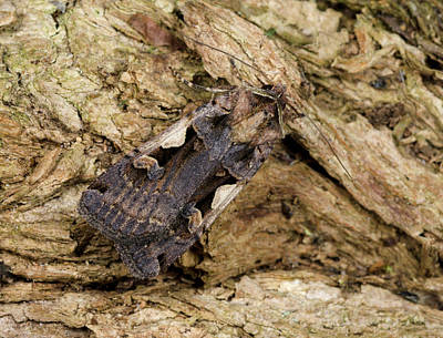 Setaceous Hebrew Character Print by Nigel Downer