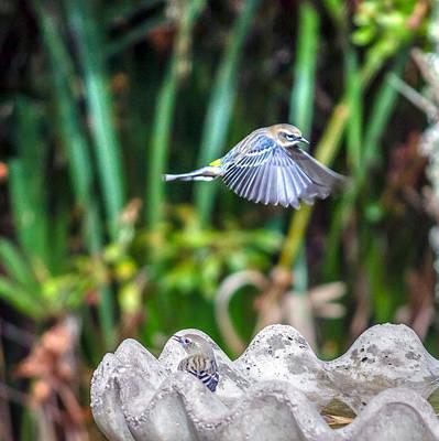 Warbler Digital Art - Setophaga Coronata by Rob Sellers