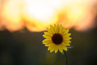 Setting Sun Flower Print by Peter Tellone
