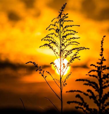 Setting Sun Print by Parker Cunningham