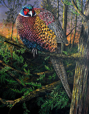 Settling For The Night - Roosting Ringneck Original by Dick Twinney