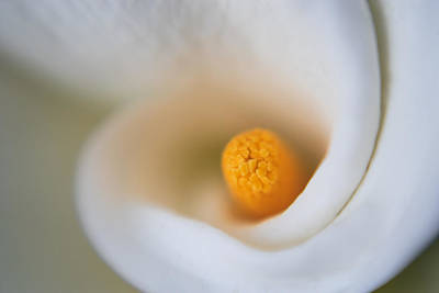 Flowers Photograph - Sexy Curves by Scott Campbell