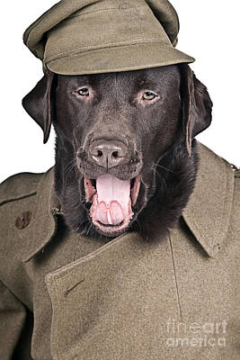Sgt Dog Shouting His Orders Print by Justin Paget