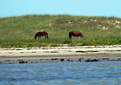 Wild Horse Photograph - Shackleford Ponies 2014 2 by Cathy Lindsey