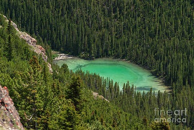 Forest Photograph - Shades Of Green by Charles Kozierok