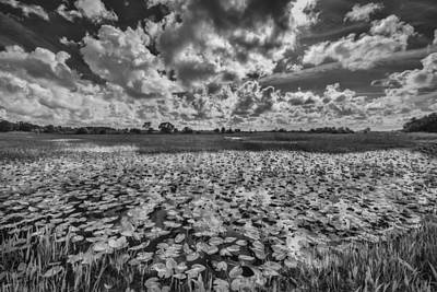 Everglades Photograph - Shadows In The Afternoon by Jon Glaser