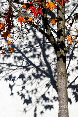 Photograph - Shadows Of Fall by CML Brown