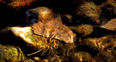 Ending Life Photograph - Shallow Beauty by Steven Milner