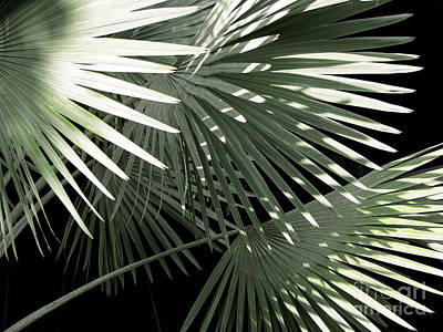 Keaau Photograph - Shapes Of Hawaii by Ellen Cotton