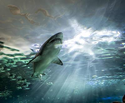 Igor Baranov Photograph - Shark by Igor Baranov