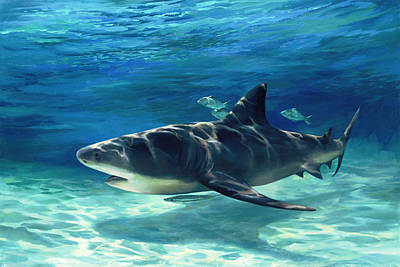 Fish Underwater Painting - Shark In Depth by Laurie Hein