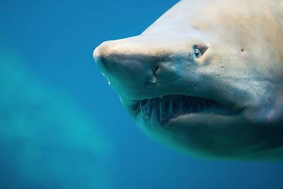 Shark Print by Johan Swanepoel