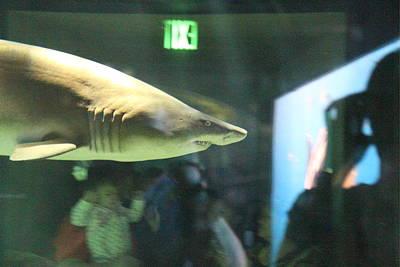 Shark Photograph - Shark - National Aquarium In Baltimore Md - 12127 by DC Photographer