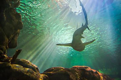 Shark Tank Print by Bill Pevlor