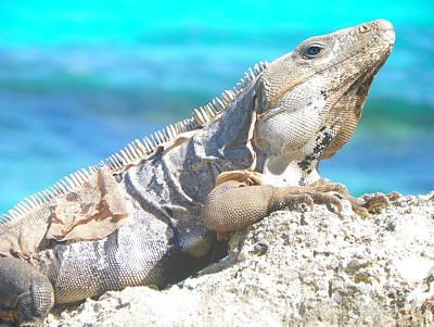 Iguana Photograph - Shedding Skin by Paul Smith