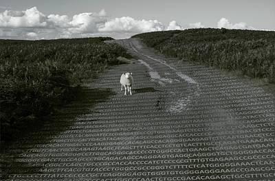 Base Path Photograph - Sheep And Its Dna by Robert Brook