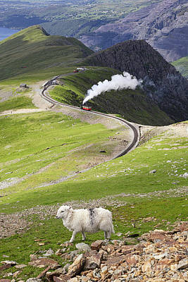 Snowdonia Photograph - Sheep And Mountain Railway by Jane Rix