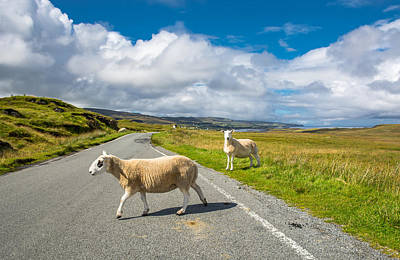 Sheep Crossing A Lonely Country Road In The Scottish Highlands Print by Andreas Berthold