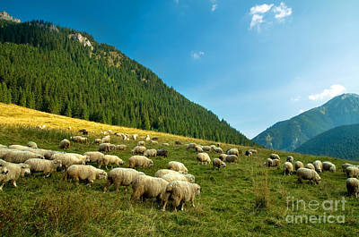 Sheep Photograph - Sheep Farm In The Mountains by Michal Bednarek
