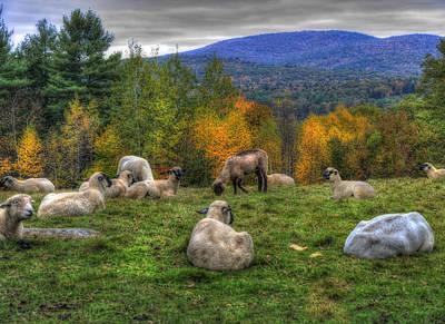 Country Photograph - Sheep Grazing On Mountain  by Joann Vitali