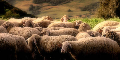 Landscapes Photograph - Sheep On A Hillside by Andrew Soundarajan
