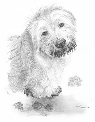 Sheepdog Muddy Pencil Portrait Print by Mike Theuer