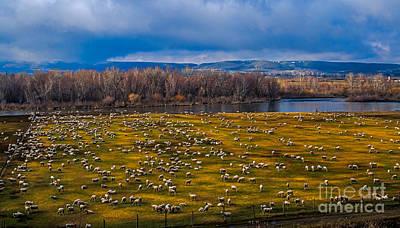 Sheepraising Print by Robert Bales