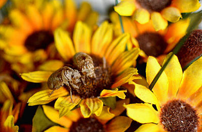 Shell Of A Bug On Flower Print by Jeffrey Platt