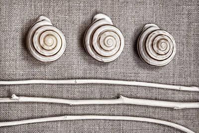 Seashell Photograph - Shells And Sticks by Carol Leigh