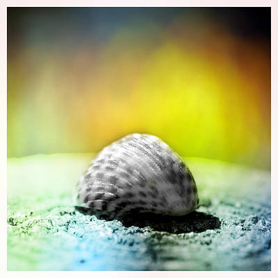Shells On A Rock Original by Toppart Sweden