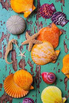 Shells On Old Green Board Print by Garry Gay