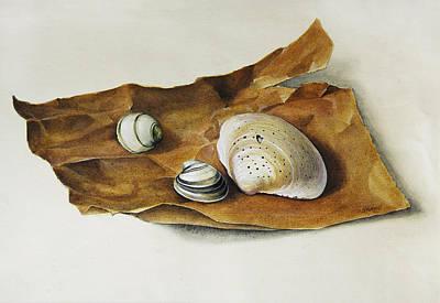 Shells On Paper Print by Horst Braun