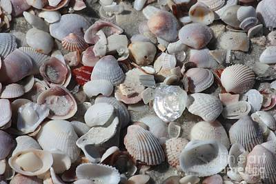 Beach Theme Decorating Photograph - Shells On Treasure Island by Carol Groenen