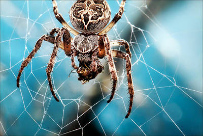 Outdoor Photograph - Spider's Web by EXparte SE