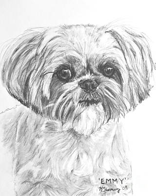 Shih Tzu Portrait In Charcoal Print by Kate Sumners