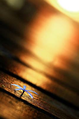Suradej Photograph - Shine On Me by Suradej Chuephanich