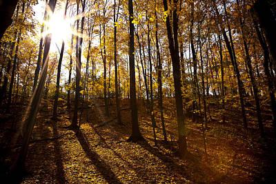 Shining Sun In The Woods Print by Kamil Swiatek