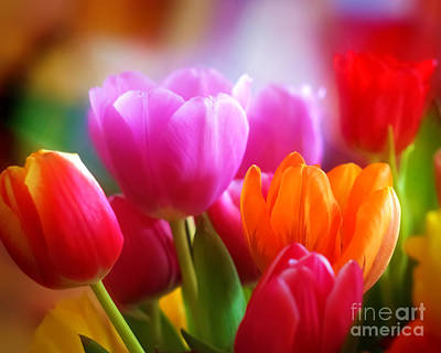 Square Flower Photograph - Shining Tulips by Lutz Baar