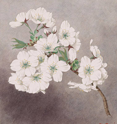 Japanese Painting - Shirayuki - White Snow - Vintage Japan Watercolor by Just Eclectic
