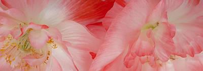 Shirley Poppies Print by Theresa Tahara