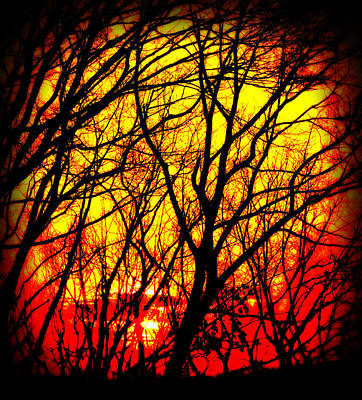 Abstract Photograph - Shivering Branches Illuminated I by Aurelio Zucco