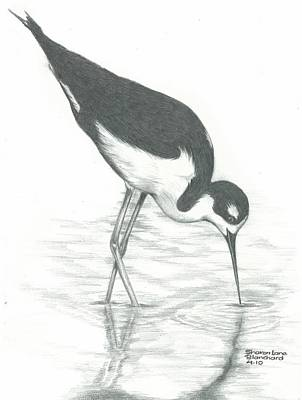 Shore Bird Print by Sharon Blanchard