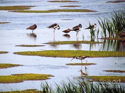 Bird Photograph - Shorebirds At Bombay Hook by Rrrose Pix