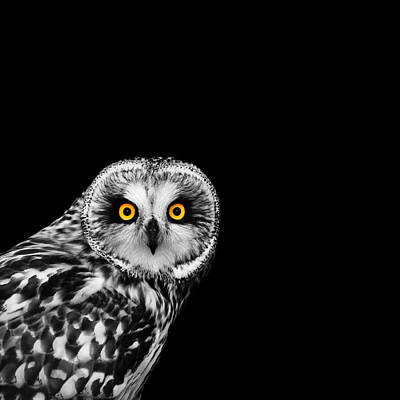 Black And White Bird Photograph - Short-eared Owl by Mark Rogan